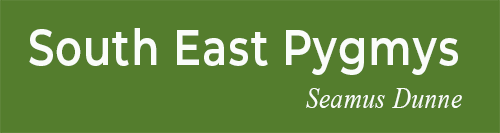South East Pygmys